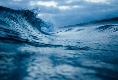 The Ocean is an essential life force, and we must stop its destruction