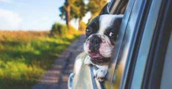 Dog videos will make you smile, laugh out loud, and cry