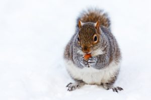 Give the wildlife in your backyard a cozy winter home