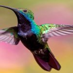 How to attract hummingbirds to your backyard garden, and help them survive in a world full of threats.