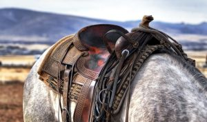 The equestrian sport of cutting evolved from the special skills of 19th century cowboys and their horses working cattle ranches in the American West