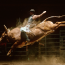 Bull riding has historical roots back to the 16th century, and we remain fascinated today by this dangerous rodeo sport and inspired by the skill and courage of both the rider and bull.