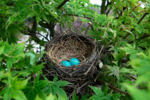 You can help birds in your backyard during nesting season by providing good spots for nest building.