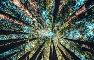 Looking up at the trees is magical, but you may be surprised to know these are social beings.