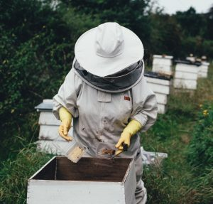Beekeeping requires commitment and know-how, but there are resources and local clubs to help the beginner beekeeper get started.