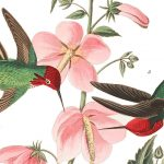 Hummingbirds are fun to watch and John Audubon's illustrations in The Birds of America are extraordinary.